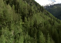 au dessus de la forêt